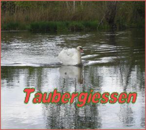 Taubergiessen 49