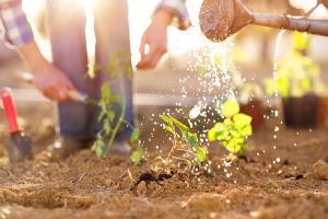 Bewässerung einer Pflanze