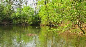 Ein Entennest mitten im Teich..