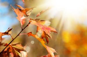 Herbstliche Blätter im Sonnenschein