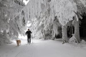 Langläufer mit Hund beim Skilanglauf mit verschneiten Tannen