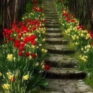 Stiege mit Blumen