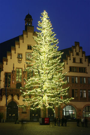Weihnachtbaum auf dem Römerberg Frankfurt