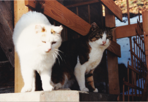 2 von unseren 8 Katzen.