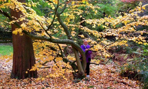 Exotischer Baumbestand im Schwesternpark Witten