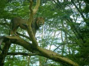 Besuch in Kenia