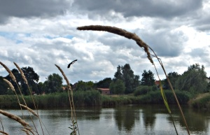 Steimbker See