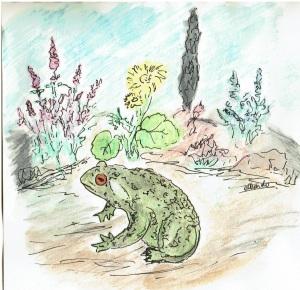Zeichnung einer Erdkröte