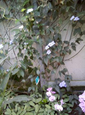 an der wand Orchidee