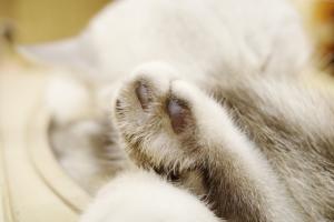 Katzenpfote in Nahaufnahme