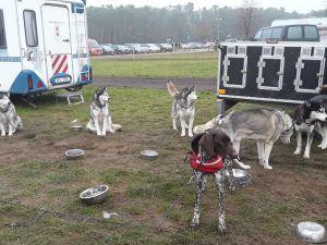 Schlittenhunde Threema (1).jpg