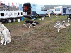 Schlittenhunde Threema (5).jpg
