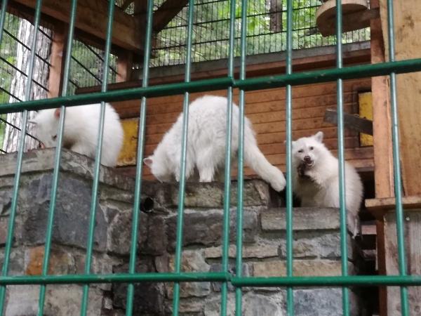 Kernerhof Weisser Zoo