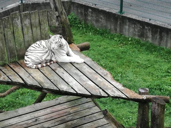 Kernerhof Weisser Zoo,- die weissen Tieger von Siegfried und Roy