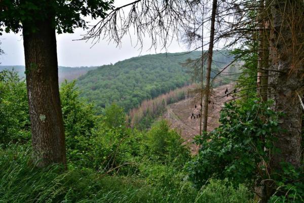 Viel Wald ...