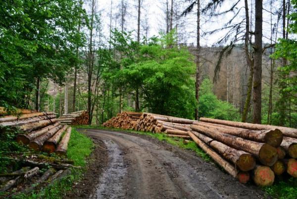 Holz, nix als Holz begleitete unseren Weg.