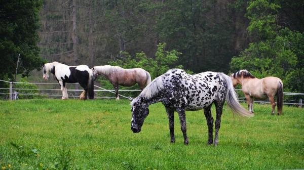 die Pferde vom Gut Ommeroth ignorierten uns.