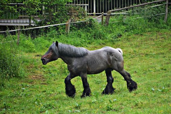 Noch ein Pferd ...