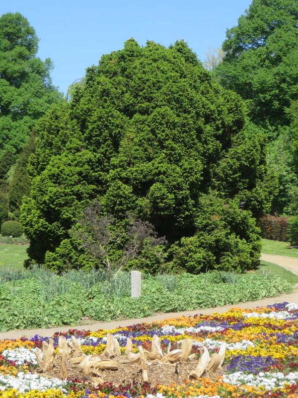 b40_HH_Botanischer_Garten.JPG