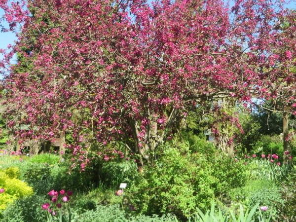 b42_HH_Botanischer_Garten.JPG