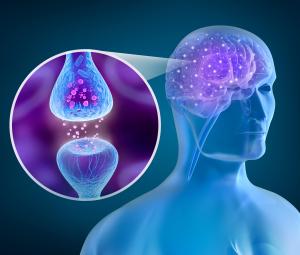 Synapsen im Gehirn