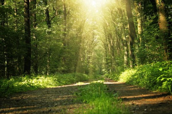 Lichtdurchflutete Waldlichtung