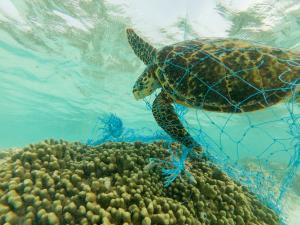 Schildkröte im Netz