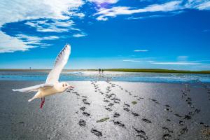Möwe an Nordseeküste und Fußabdrücke im Watt