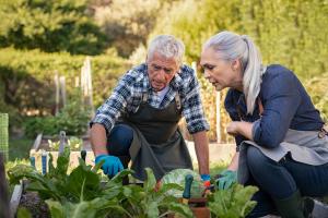zwei Personen bei der Gartenarbeit