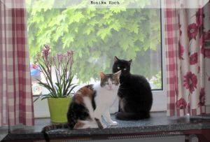 zwei Katzen auf der Fensterbank