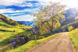 Schwarzwald Sommer