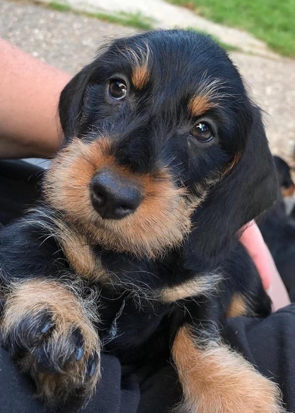 Max 2 Monate alt