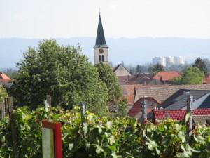 IMG_1183.JPG Das südlichste Weindorf in Baden Württemberg