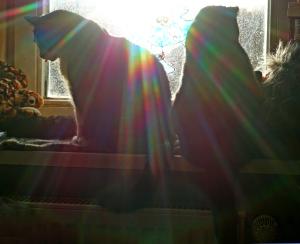 Zwei am Fenster