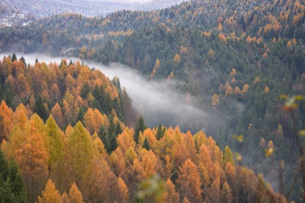 Blick auf herbstlich Wälder und Nebel über dem Tal