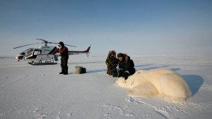 Eisbär und Forscher