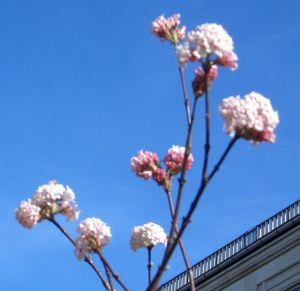 Blütenpracht am Leipziger Opernhaus