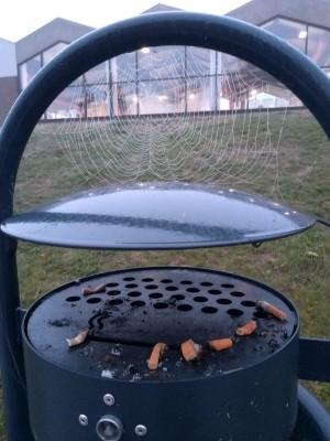 Rauchen war gestern, es ist ungesund für das Herz.  Die Spinne symbolisiert für mich einen neuen Anfang.  Daher dieses Bild.