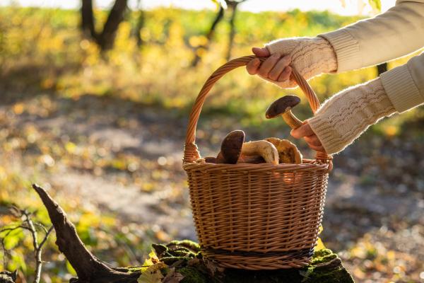 Korb mit gesammelten Pilzen