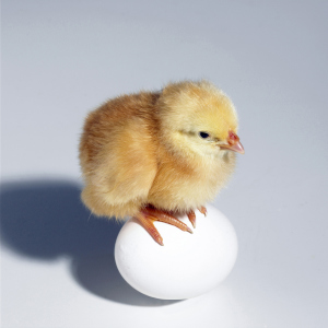 Küken sitzt auf einem Ei