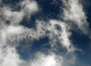 Vogelzug.jpg