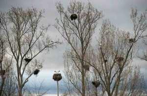 Belegte Storchennester
