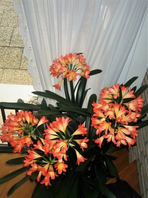 IMG_3322.JPGEine wunderschöne Blütenpracht