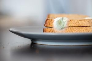 Verschimmeltes Brot