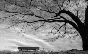 Baum und Bank in schwarzweiß