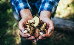 Hände voll mit Pilzen