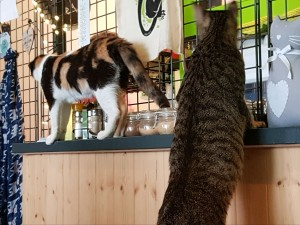 die Katzen wissen natürlich, dass es hier was zu essen gibt...:-))