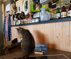 für die Besucher gibt es Katzensouvenirs zu kaufen...