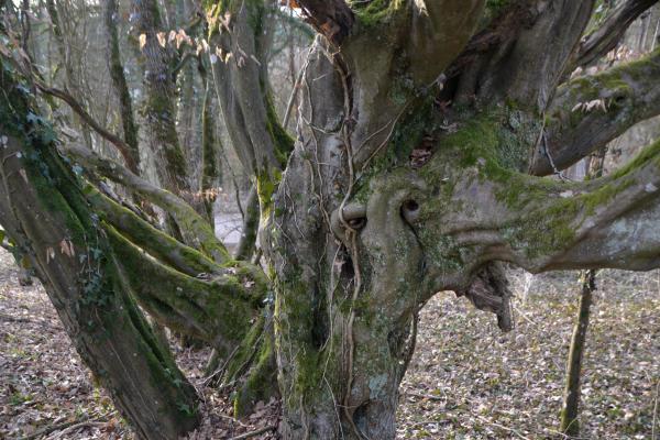 wundersamer Baum