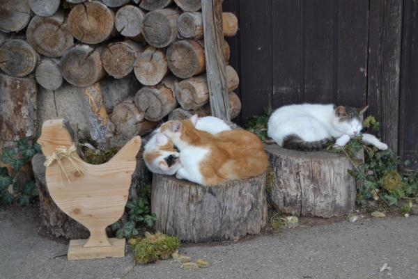 Ostern im Katzenparadies